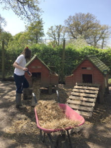 Girl filling chicken huts with hay